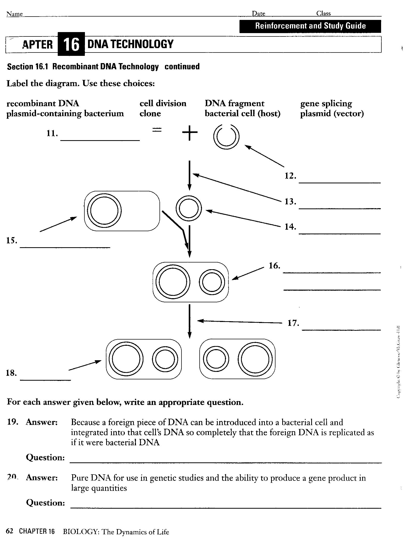 fileaspx – Dna Model Worksheet