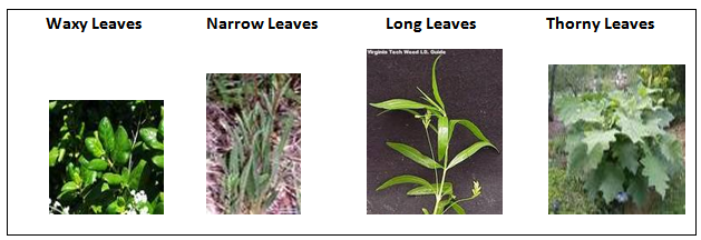 l3-01leaves.PNG