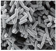l1-01bacterium.PNG