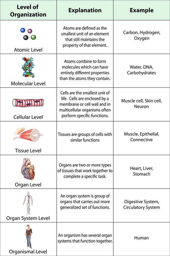 Quiz return practice with flashcards for regions - TEST ON MONDAY ON HOMEOSTASIS BIOLOGICAL ORGANIZATION AND BODY REGIONS