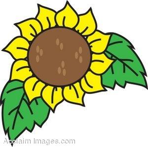country-sunflower-clip-art-529188.jpg