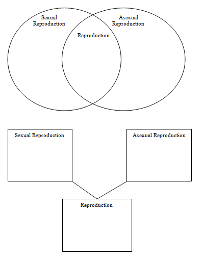 Comparing asexual and sexual reproduction worksheet