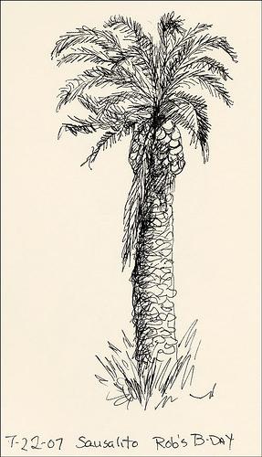 pa-palmtree.jpg